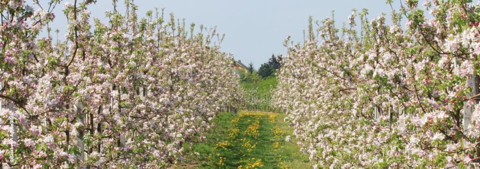 Obst- und Weinbau zum Start der Vegetation